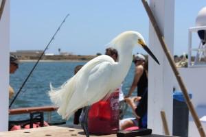 CAoceanfishing1