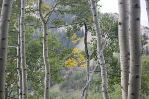 CO Elk Hunt 6
