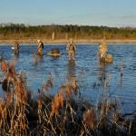Littleton Duck Hunt 4