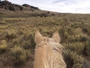 Bear Basin Ranch Hunt 3