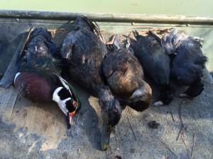 Monquin Creek Duck Hunt 3