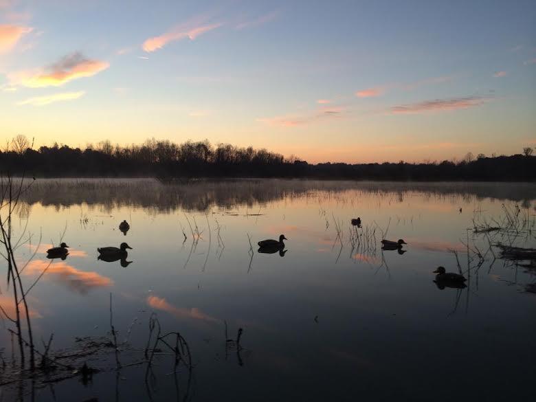 Monquin Creek Duck Hunt 2