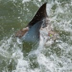Bowfishing Stingrays 3