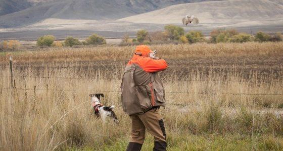 Pheasant-570x300