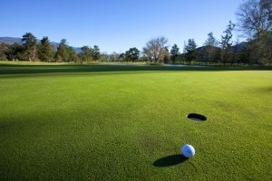 Putting green of a golf course.